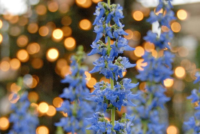 flowers, lights