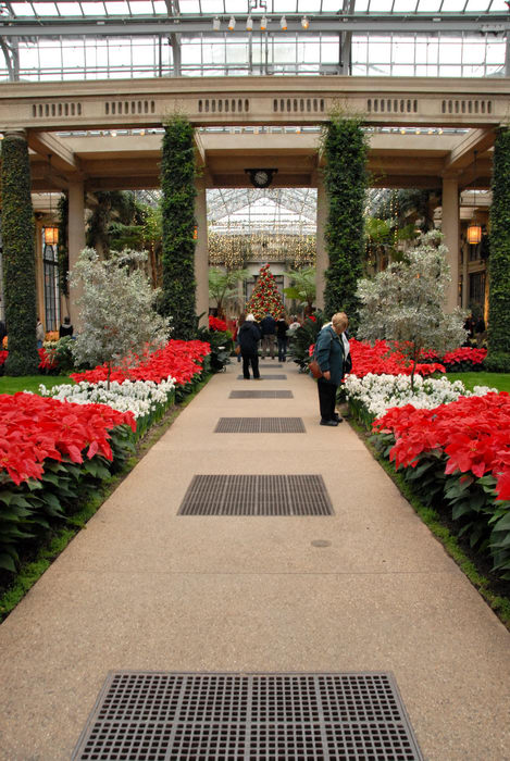 Poinsettia, Conservatory, Flowers, Gardens, Greenhouse, Ivy, Path, People,