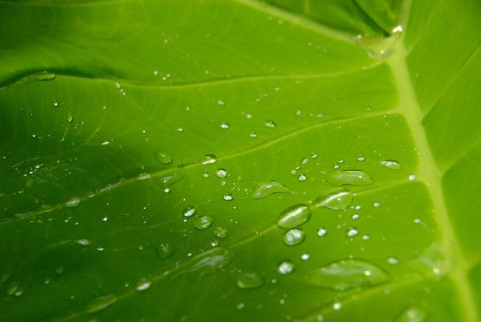 dropplet, leaf, macro, water