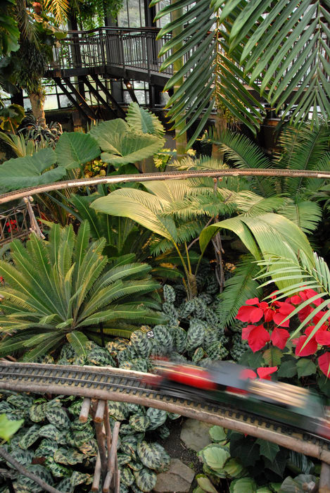 flowers, gardens, model train, palms, trees