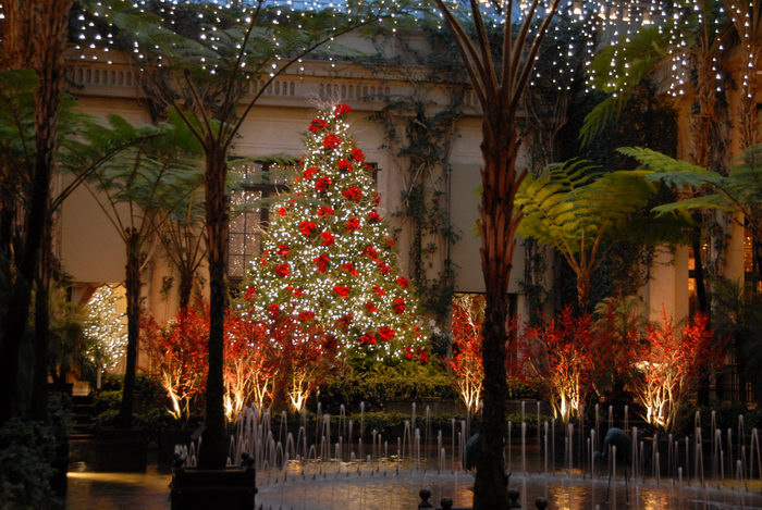 Christmas tree, My Favorite Pictures, fountain, gardens, holiday lights, lights, ornament, water