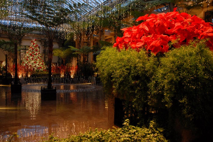 Christmas tree, My Favorite Pictures, Poinsettia, conservatory, fountain, gardens, holiday, ivy, lights, ornament, water