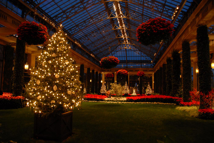 My Favorite Pictures, conservatory, gardens, grass, holiday lights, lights, nighttime, ornament