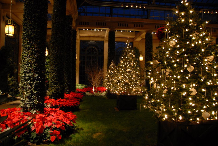 Christmas tree, Poinsettia, gardens, grass, holiday lights, ivy, lights, nighttime, trees