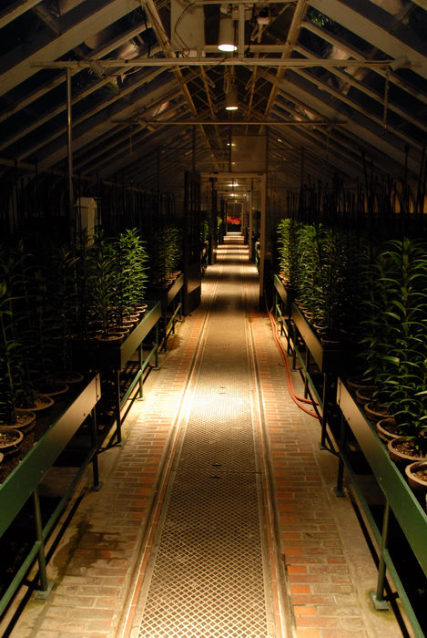 greenhouse, nighttime, path, walkway