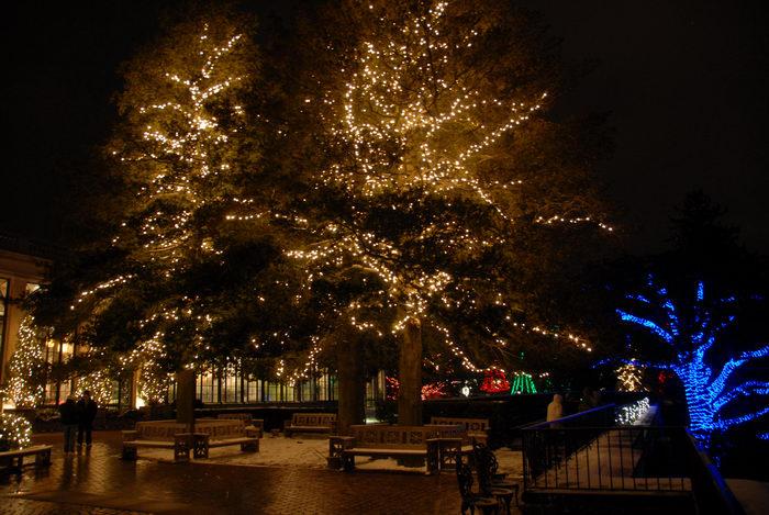 holiday lights, lights, nighttime, ornament, trees