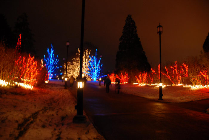 lights, nighttime, ornament, path, snow, trees, walkway