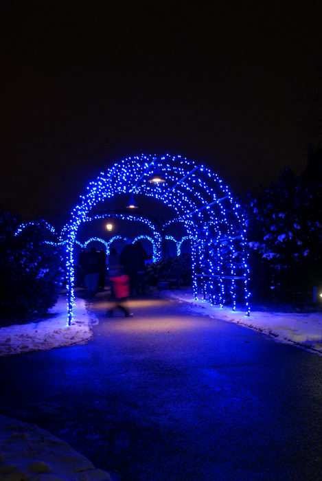 holiday lights, lights, nighttime, ornament, path, walkway