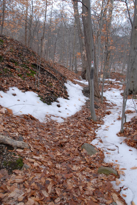 snow, trail, trail marker, trees, woods
