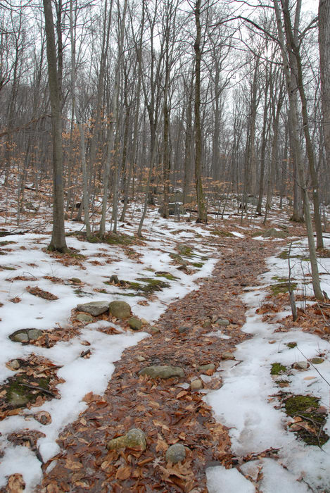 snow, trail, trees, woods