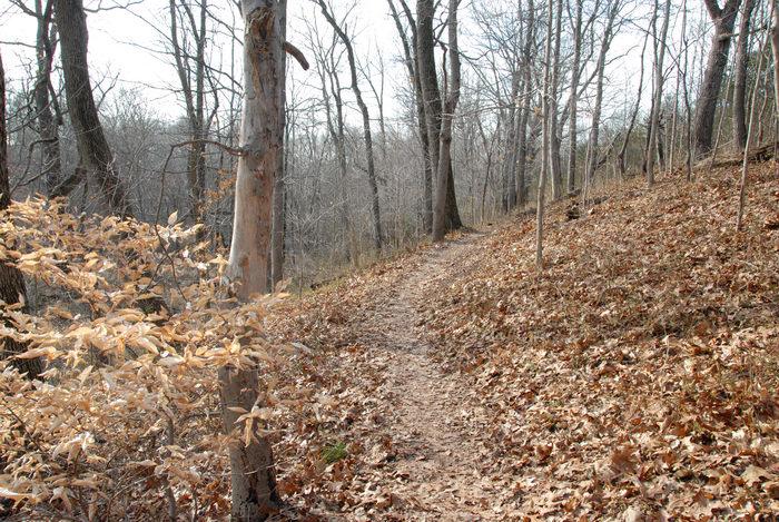 hills, path, trail, trees, woods