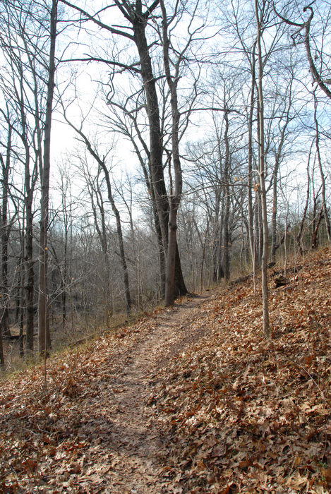 hill, path, trail, trees, woods