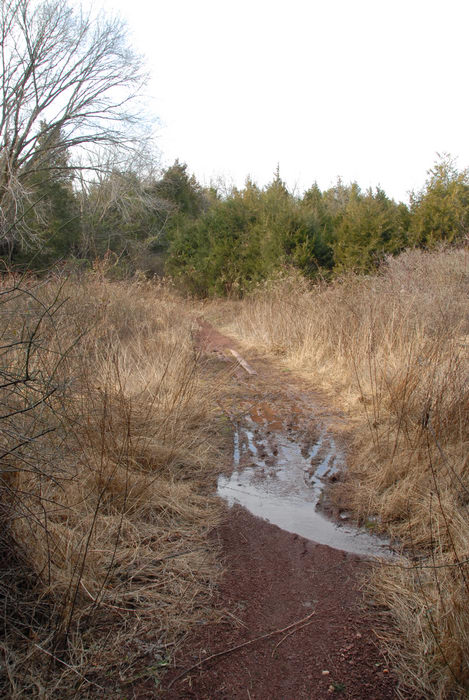 ground cover, mud, path, stream, trail, water, woods