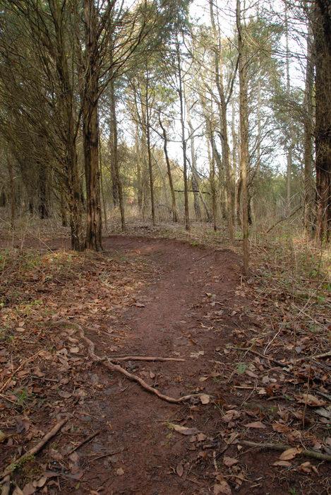 berm, path, trail, trees, woods
