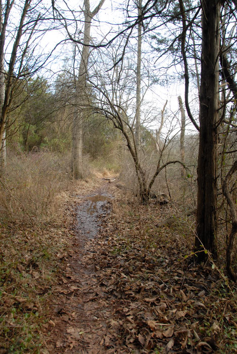 grass, ground cover, mud, path, stream, trail, trees, water, woods