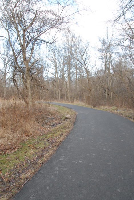bike path, path, road, trail, trees