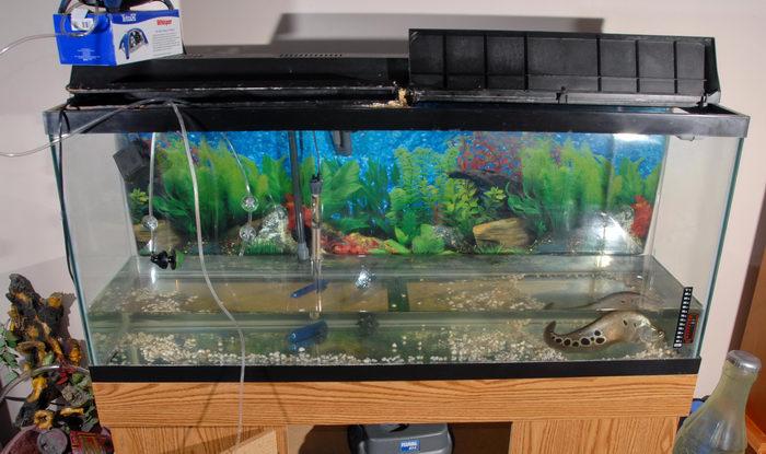 clown knife, fish tank, tube, water