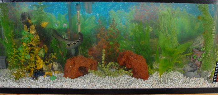 fish tank, water