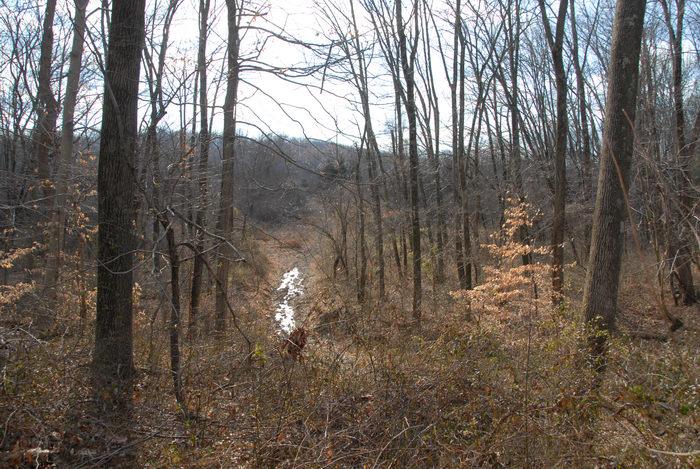 stream, trail, water, woods