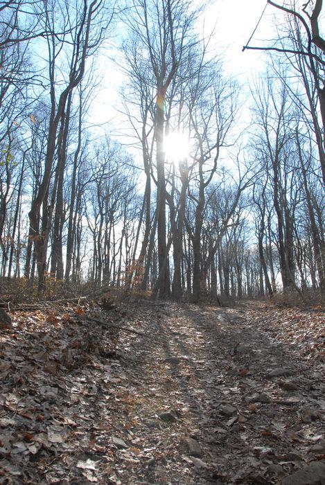 sunglasses, trail, woods