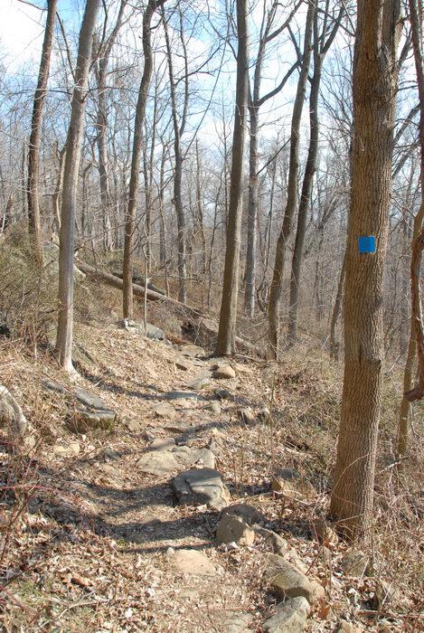 rocks, trail, woods