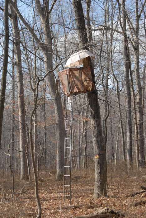 hunting stand, ladder, woods