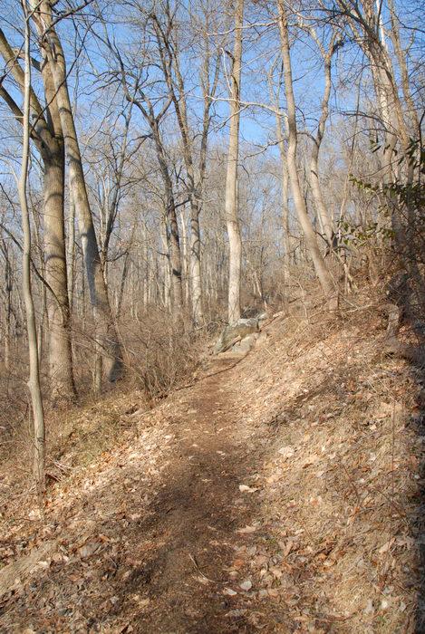 trail, woods