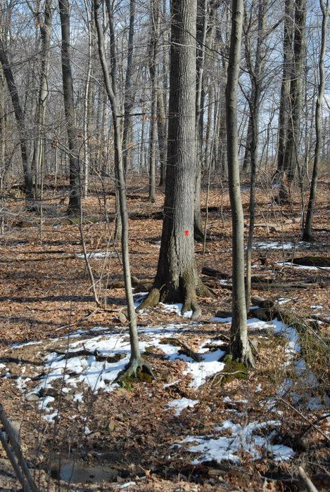snow, woods