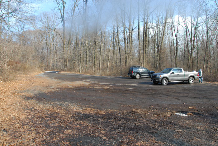 cars, parking, woods