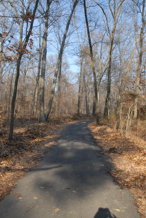 path, paved, trail, woods