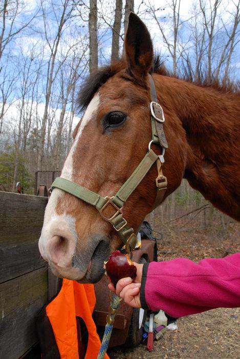 Danielle, horse