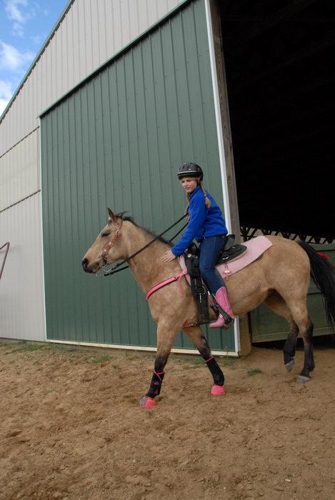 barn, horse