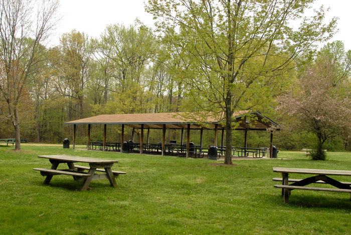 grass, picnic tables, trees, woods