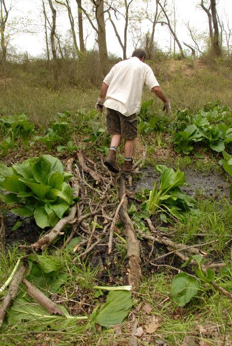 SMART, Trail Maintenance, grass, ground cover, prickers, stick bridge, trees, water, woods