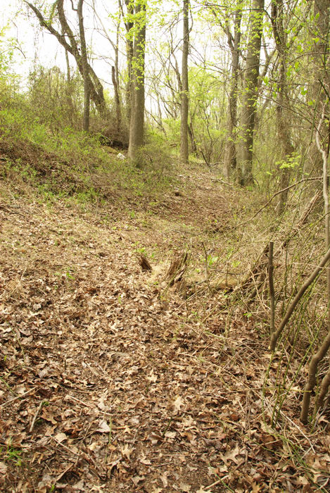 ground cover, path, prickers, trail, trees, woods