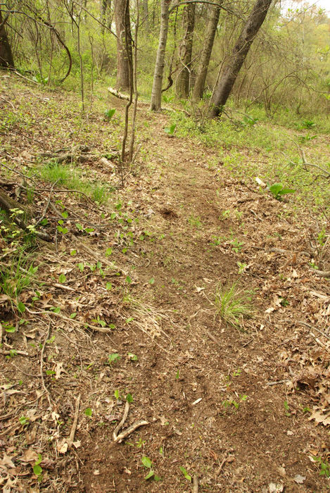 ground cover, path, trail, trees, woods