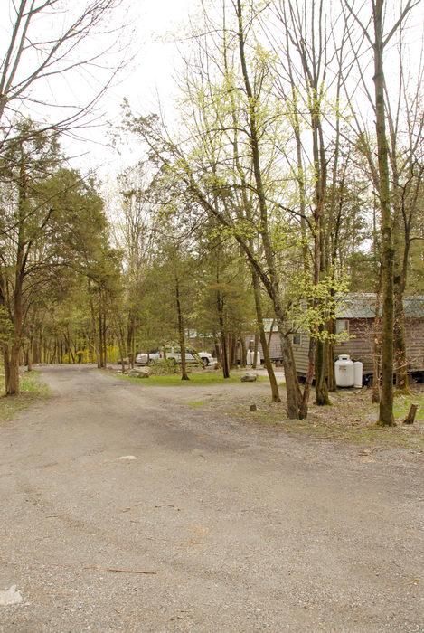 cabin, road, woods