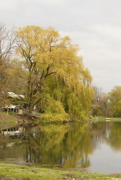 lake, water, weeping willow