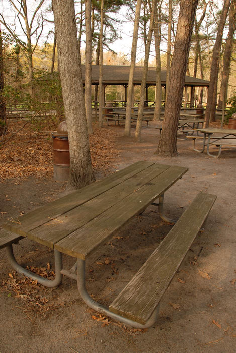 picnic shelter, picnic table, woods