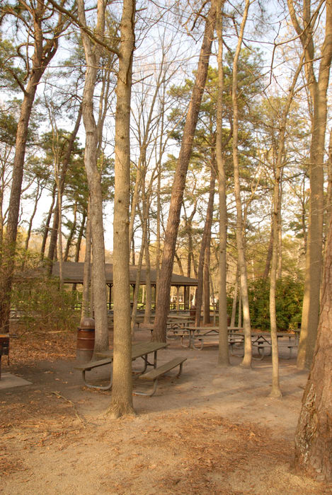 picnic shelter, picnic tables, trees, woods