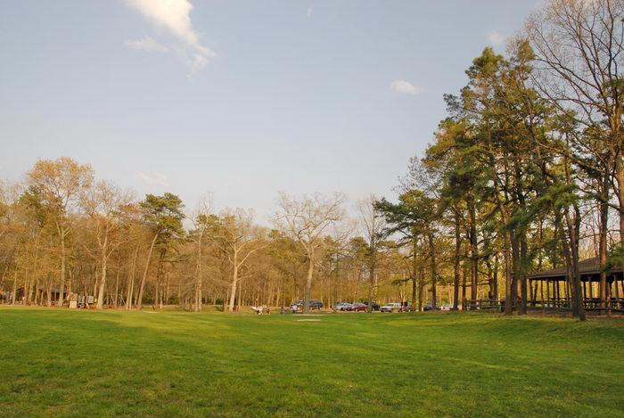 field, trees