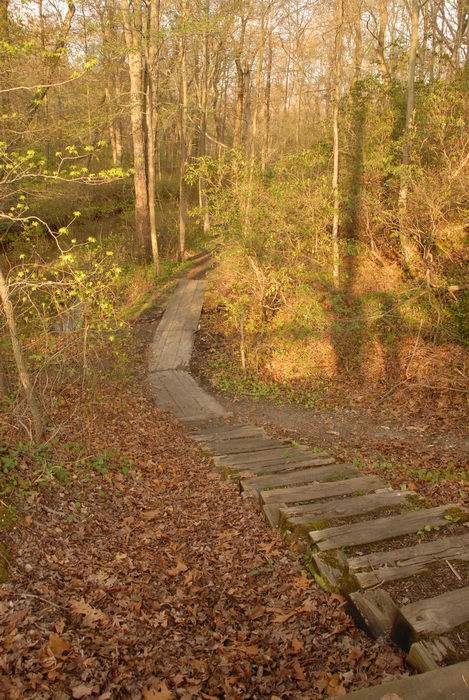 boardwalk, stairs, trees, woods