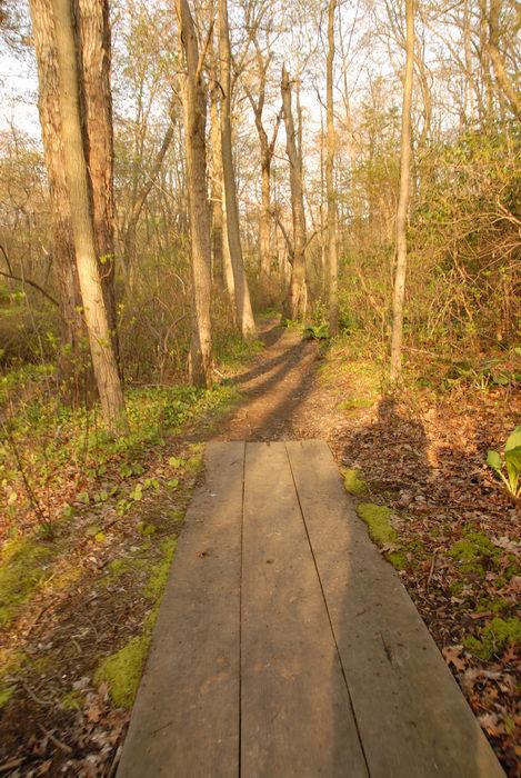 boardwalk, trail, trees, woods
