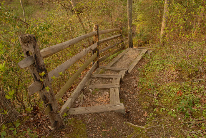 fence, stairs, trees, woods