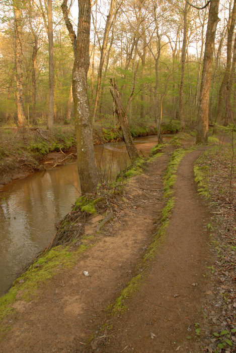 Shark River, river, trail, trees, water, woods