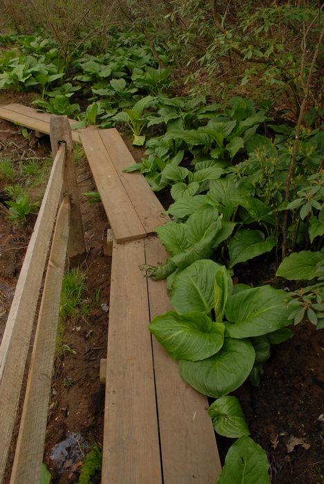 boardwalk, fence, trail