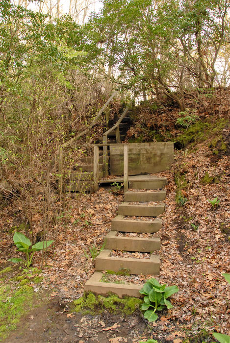 stairs, trees, woods