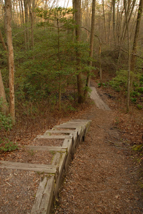 stairs, trail, trees, woods