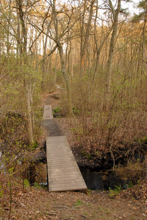 boardwalk, trees, water, woods