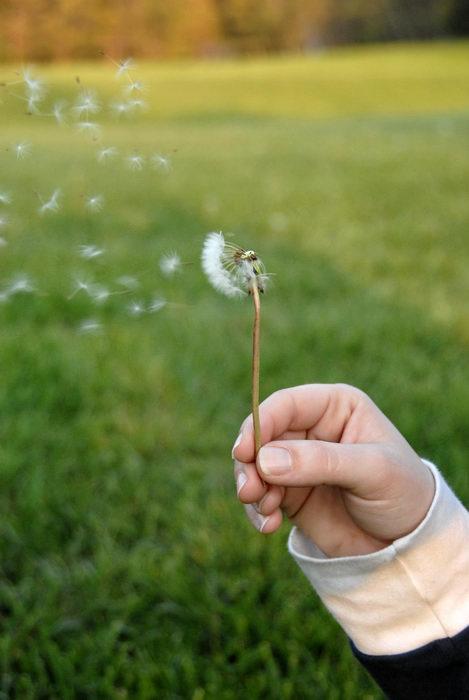 Jacki, blowing, dandelion, field, weeds
